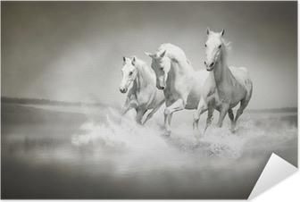 Valkoisten hevosten karja, joka kulkee veden läpi Itsestäänkiinnittyvä Juliste