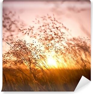 Kesällä kuivaa ruohoa Itsestäänkiinnittyvä Valokuvatapetti