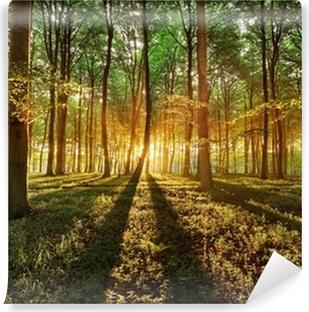 Kevätmetsi Itsestäänkiinnittyvä Valokuvatapetti