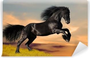 Musta friisiläinen hevonen galops auringonlaskussa Itsestäänkiinnittyvä Valokuvatapetti