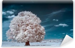 Valkoinen puu Itsestäänkiinnittyvä Valokuvatapetti