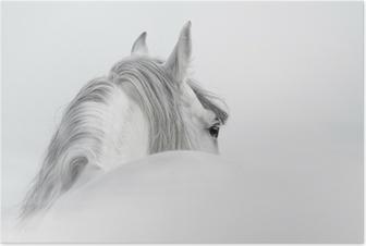 Andalusian hevonen sumussa Juliste