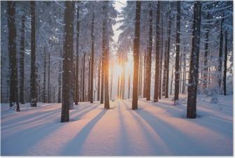 Auringonlasku puusta talvikaudella Juliste