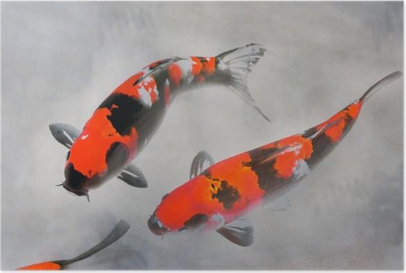 Calico koi kala akvarelli kuvitus Juliste - Merenelävät