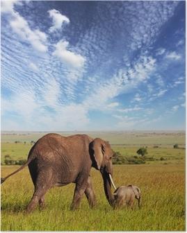 Elephant Juliste