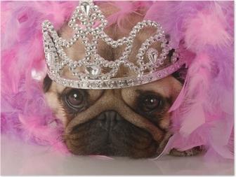 Hemmoteltu koira - suloinen mopsi pukeutunut prinsessa Juliste