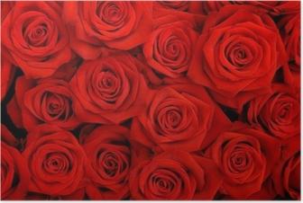 Iso joukko punaisia ruusuja Juliste