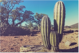 Kaktus Meksikossa Juliste