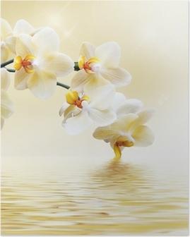Kaunis valkoinen orkidea Juliste