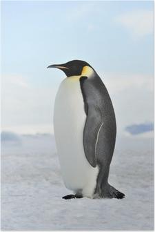 Keisari pingviini Juliste