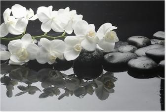 Lähikuva valkoinen orkidea kivellä vesipisaroita Juliste
