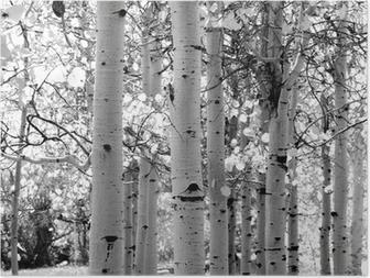 Musta ja valkoinen kuva haapa puita Juliste