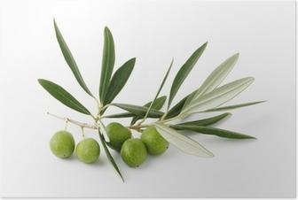 Oliivi verdi e ramoscelli - oliivinvihreä ja oksat Juliste