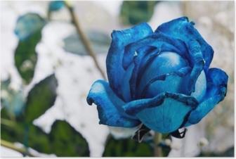 Sininen ruusu Juliste