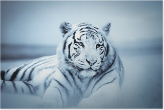 Tigre Juliste