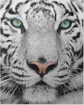 Valkoinen tiikeri Juliste