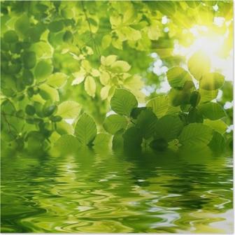 Vihreät lehdet auringon säteellä. Juliste