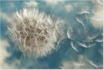 Voikukka menettää siemeniä tuulessa Juliste