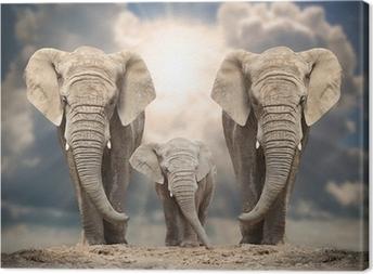 Afrikkalainen norsu perheen tiellä. Kangaskuva