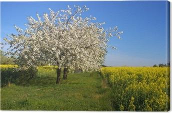 Blühender Apfelbaum Kangaskuva