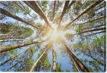 Forest Kangaskuva