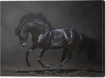 Galoppinen musta hevonen tummalla pohjalla Kangaskuva