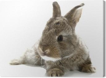 Harmaa kani pupu vauva eristetty valkoisella pohjalla Kangaskuva