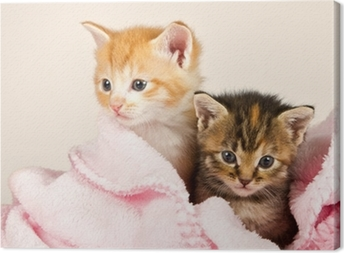 Kaksi pentua vaaleanpunaisessa peitteessä Kangaskuva