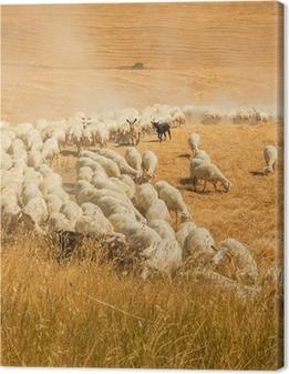 Lampaan karja Toscanan alueella Kangaskuva