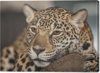 Muotokuva leopardista Kangaskuva