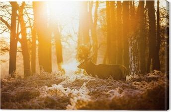 Punainen peura aamulla auringossa. Kangaskuva