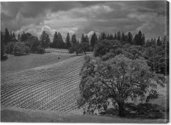 Ravista ridge ranch viinitarhoja Kangaskuva