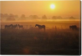 Sonnenaufgang auf einer pferdeweide Kangaskuva