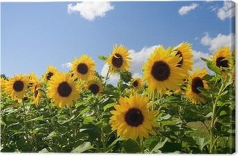 Sonnenblumen Kangaskuva