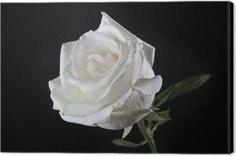 Valkoinen ruusu Kangaskuva