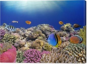 Vedenalainen maailma. punaviinin korallikaloja. Kangaskuva