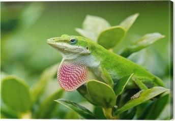 Vihreää anolinkarttua (anolis carolinensis), joka näyttää vaaleanpunaisen vaipan Kangaskuva