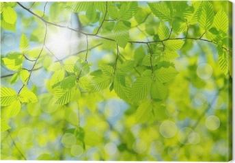 Vihreät lehdet Kangaskuva