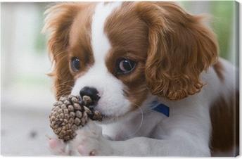 Cavalier king charles spaniel puppy Kangastuloste