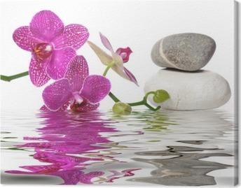 Einfach schöne orchideen Kangastuloste