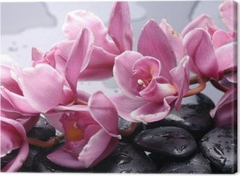 Joukko cattleya orkidea kukka ja kivi vesipisaroita Kangastuloste