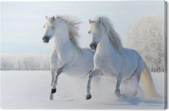 Kaksi valkoista hevosta laukkaa lumikentillä Kangastuloste