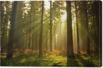 Kaunis metsä Kangastuloste