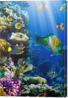 Korallikokoelma ja korallikala Kangastuloste