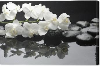 Lähikuva valkoinen orkidea kivellä vesipisaroita Kangastuloste