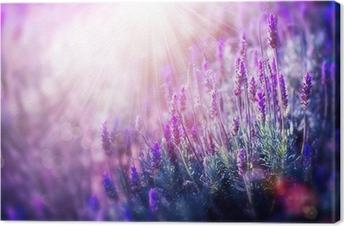 Laventeli kukkia kenttä. kasvava ja kukkiva laventeli Kangastuloste