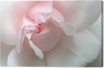 Pinkki ruusu Kangastuloste