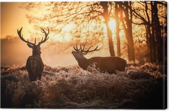 Punainen peura aamulla auringossa. Kangastuloste