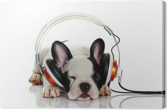 Ranskalainen bulldoggi kuulokkeilla eristetty valkoisella pohjalla Kangastuloste