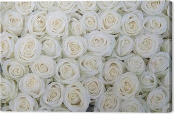 Ryhmä valkoisia ruusuja jälkeen sadesuihkulla Kangastuloste